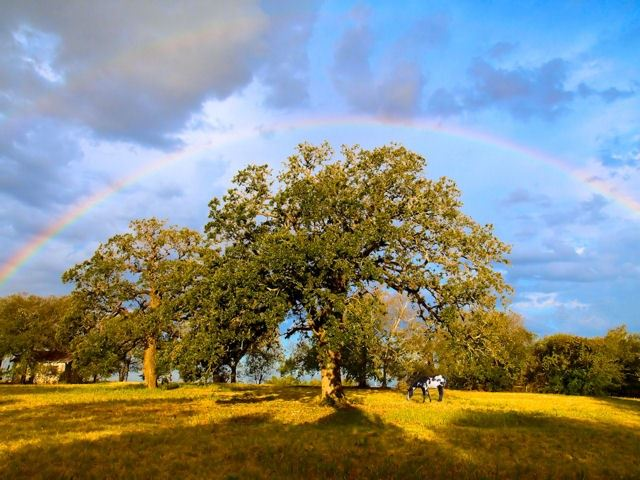 Tree Rainbow Charles Baxter
